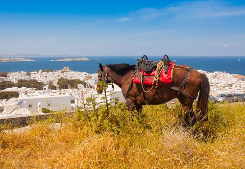 mykonos-horses