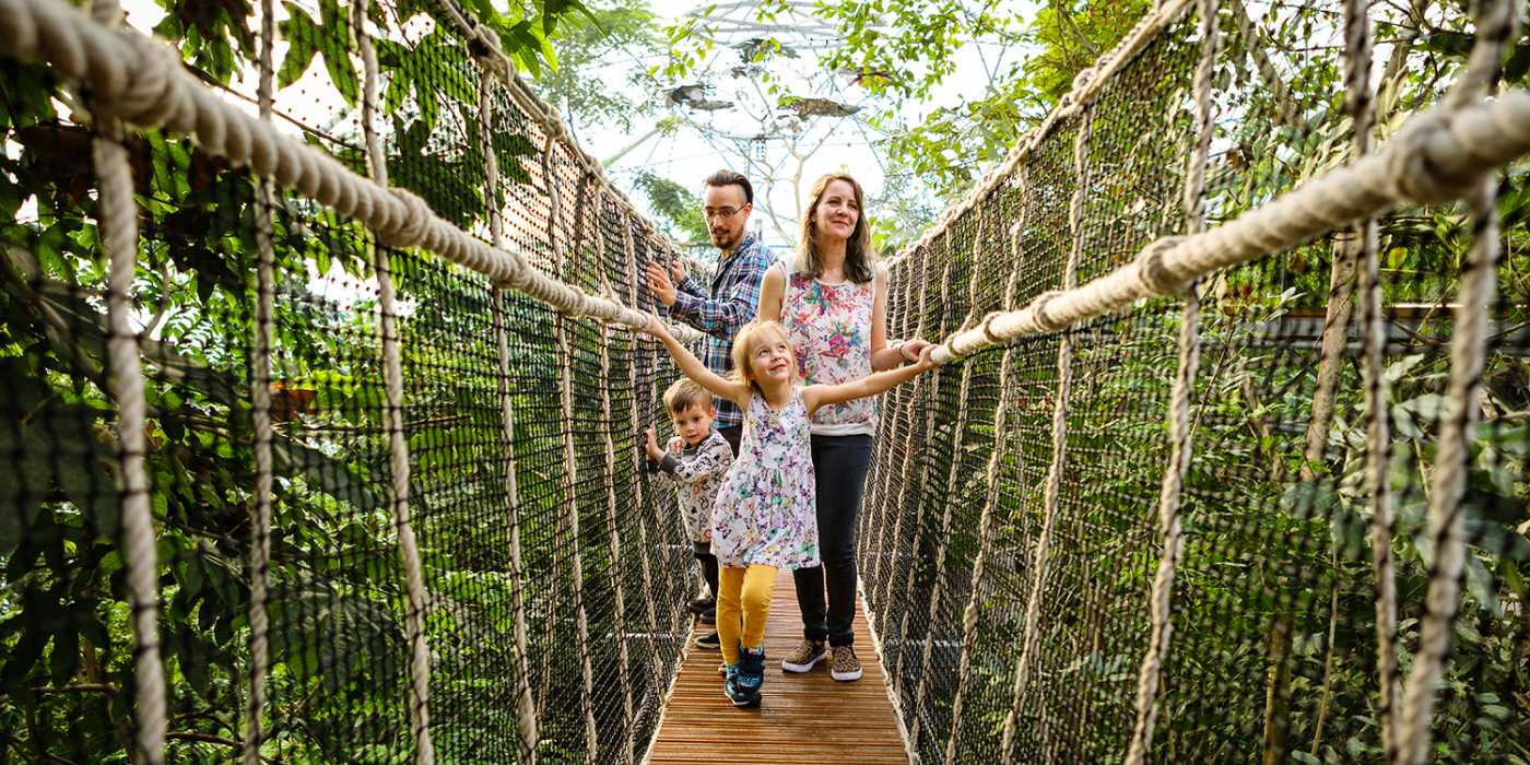 rainforest-canopy-bridge-family