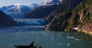 Excursii Optionale Tracy Arm