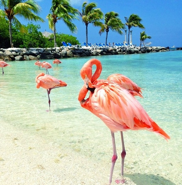 Excursii Optionale Aruba