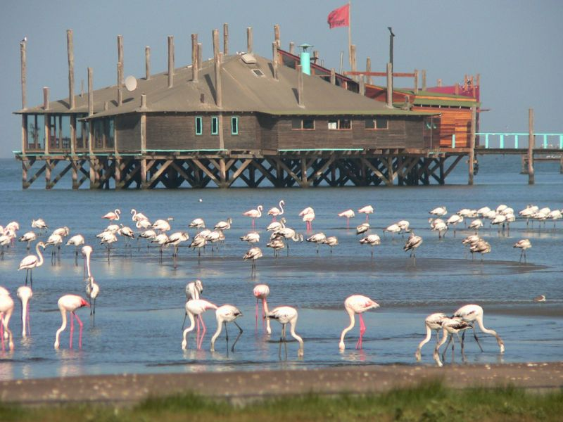 Excursii Optionale Walvis Bay