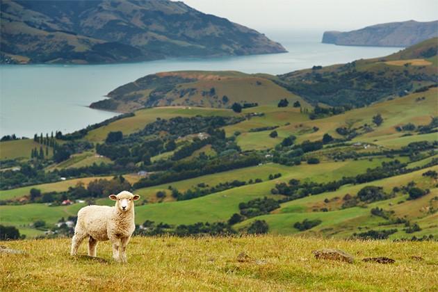 Australia/Noua Zeelanda
